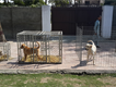 Kennels and Cages for sale in Lahore