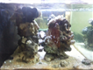 3 x 3 cube saltwater aquarium with stand and sump