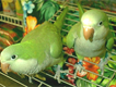 Healthy Parrots and fertils eggs