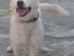 My dog SAam