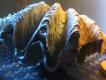 Rare Giant Oyster Bivalve Shell