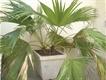 7 Indoor Plants